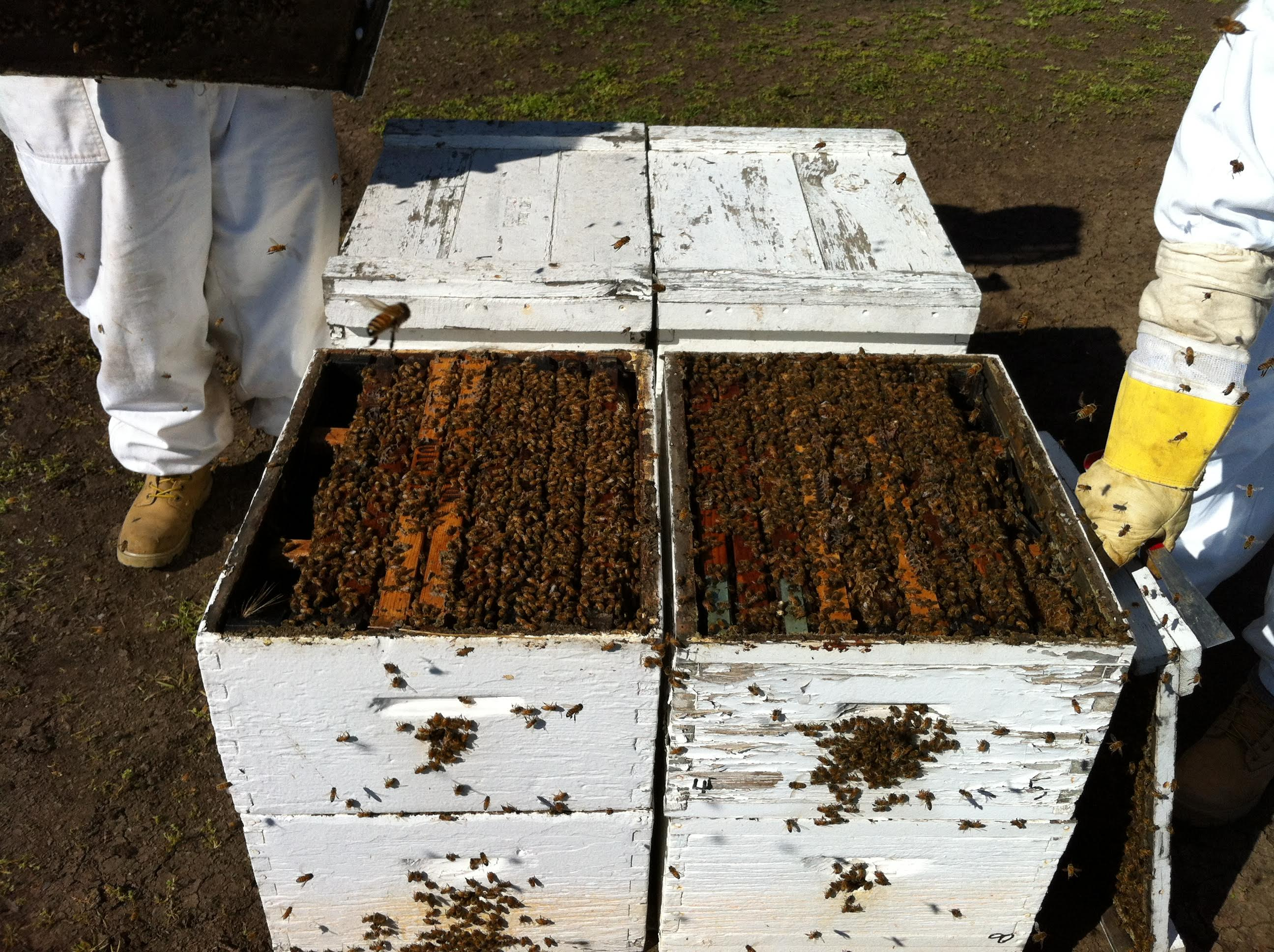 Beekeepers & Hive Info – California Almond Pollination Service